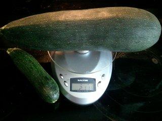 king zucchini