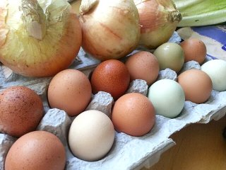 pretty colored eggs